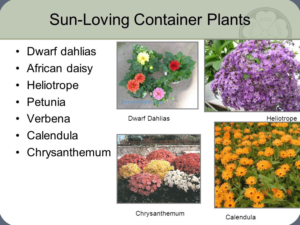 Sun-Loving Container Plants