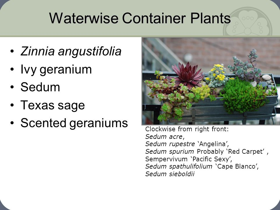 Waterwise Container Plants
