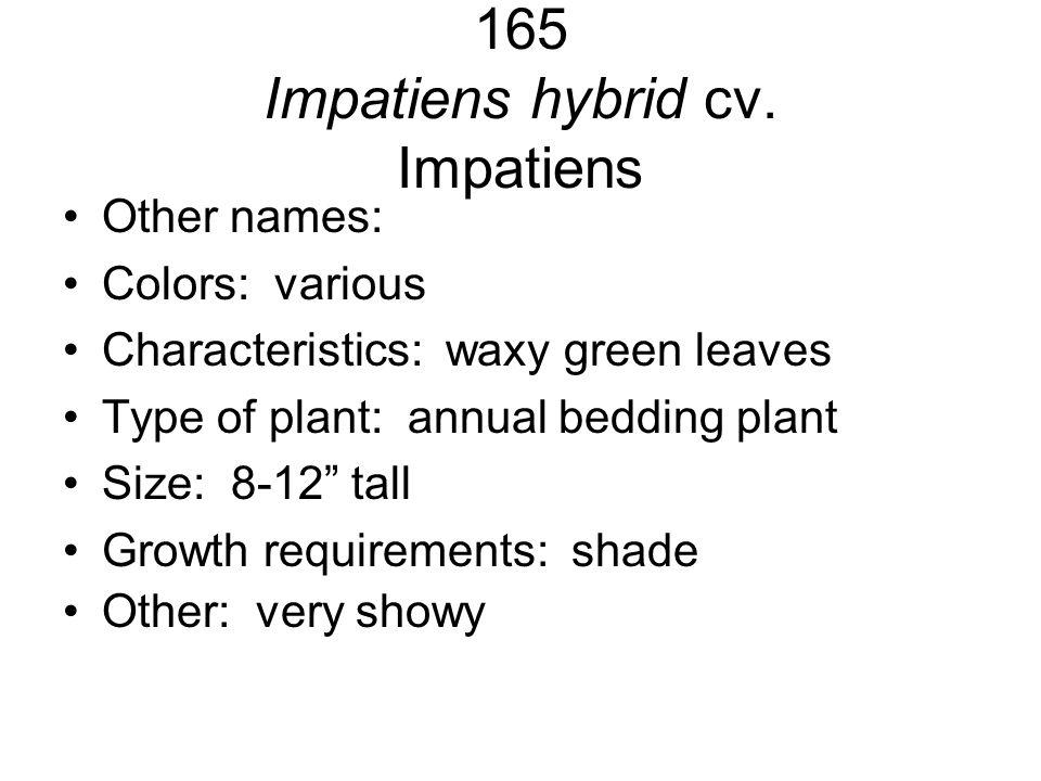 165 Impatiens hybrid cv. Impatiens