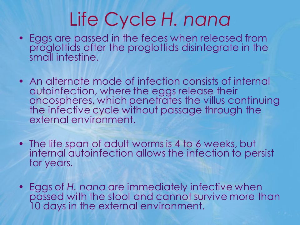 Life Cycle H. nana Eggs are passed in the feces when released from proglottids after the proglottids disintegrate in the small intestine.