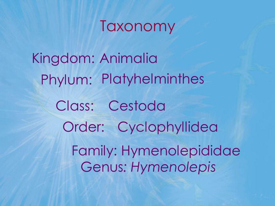 Taxonomy Kingdom: Animalia Family: Hymenolepididae Genus: Hymenolepis