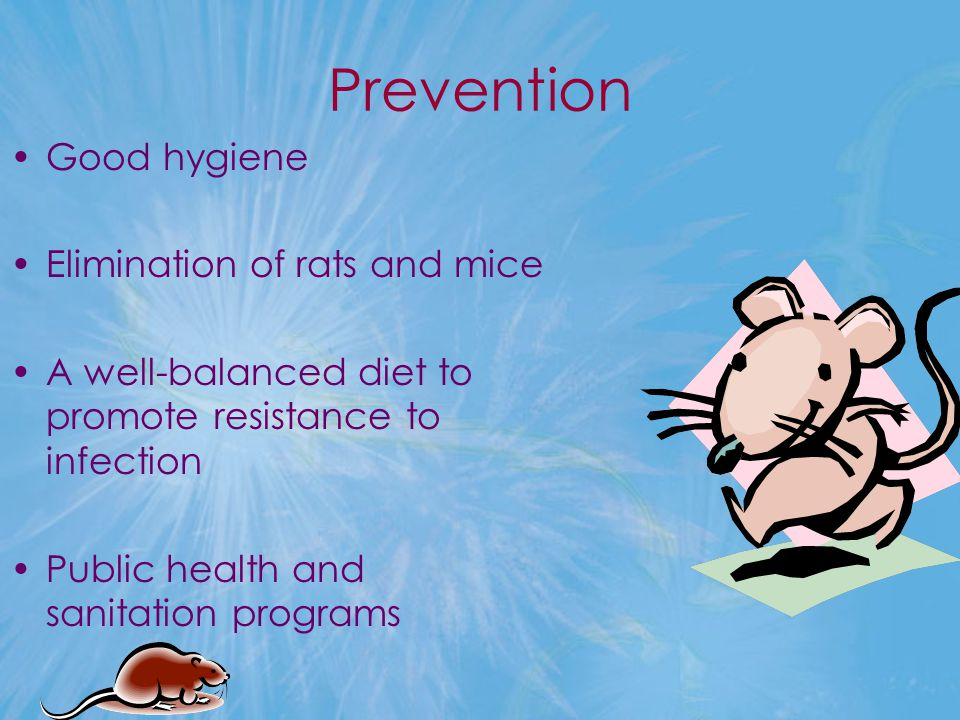 Prevention Good hygiene Elimination of rats and mice