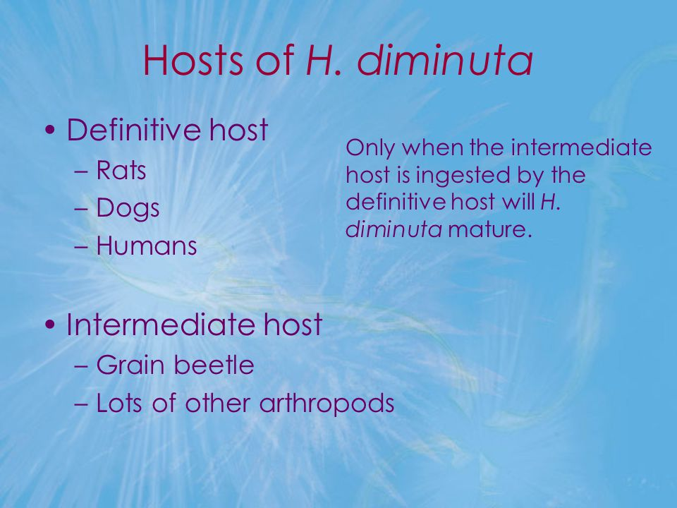 Hosts of H. diminuta Definitive host Intermediate host Rats Dogs