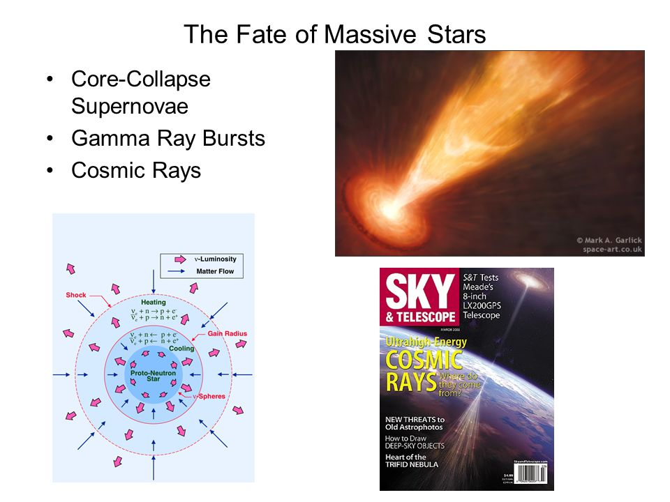 The Fate of Massive Stars