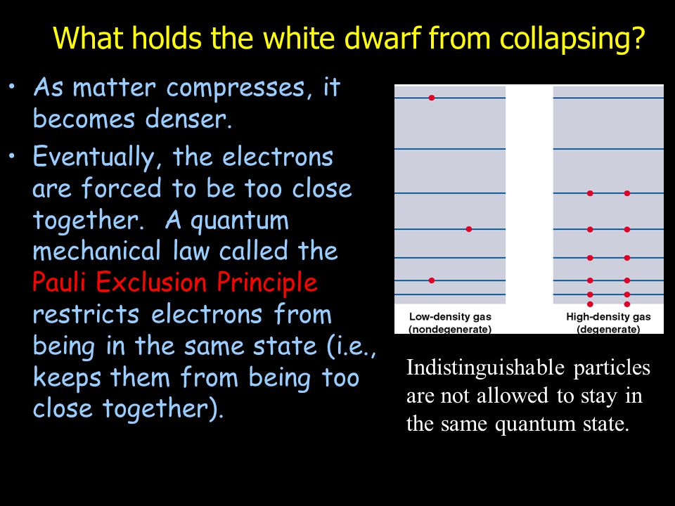 What holds the white dwarf from collapsing