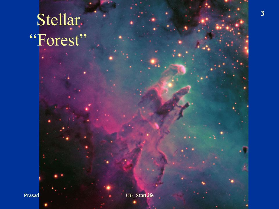 Stellar Forest Prasad U6_StarLife