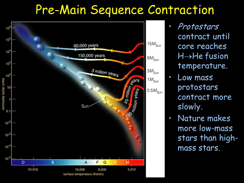 Pre-Main Sequence Contraction