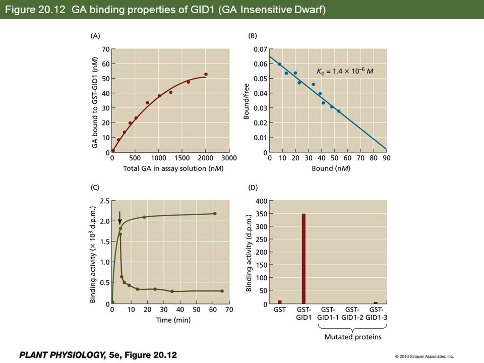 Figure 20.12 GA binding properties of GID1 (GA Insensitive Dwarf)
