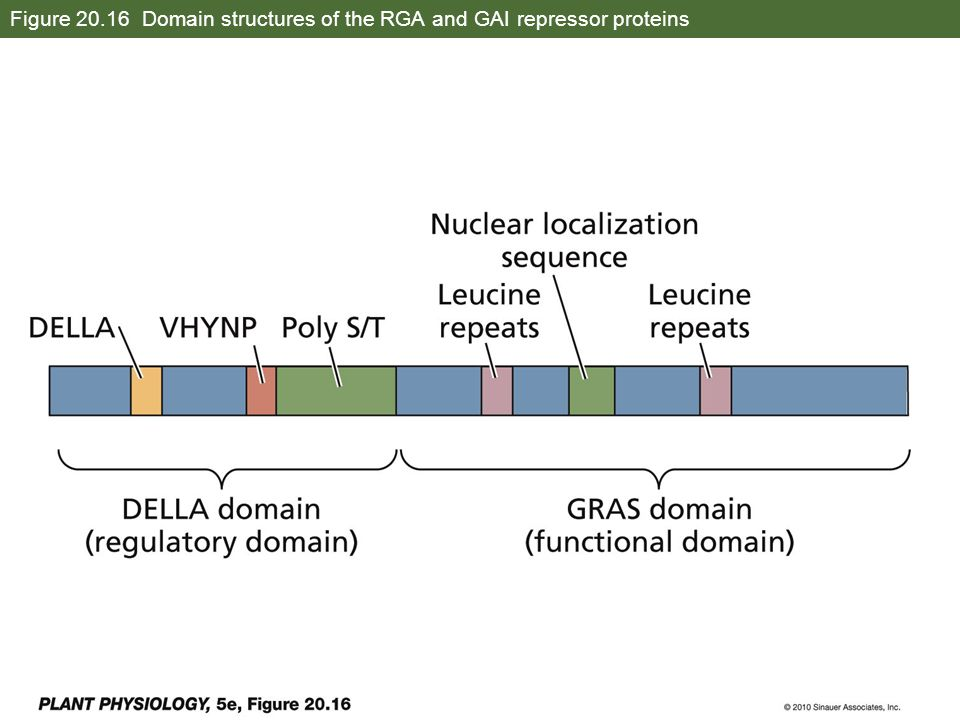 Figure 20.16 Domain structures of the RGA and GAI repressor proteins
