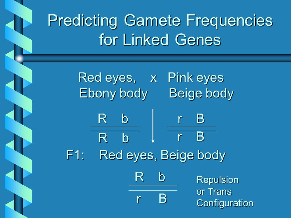 Predicting Gamete Frequencies for Linked Genes