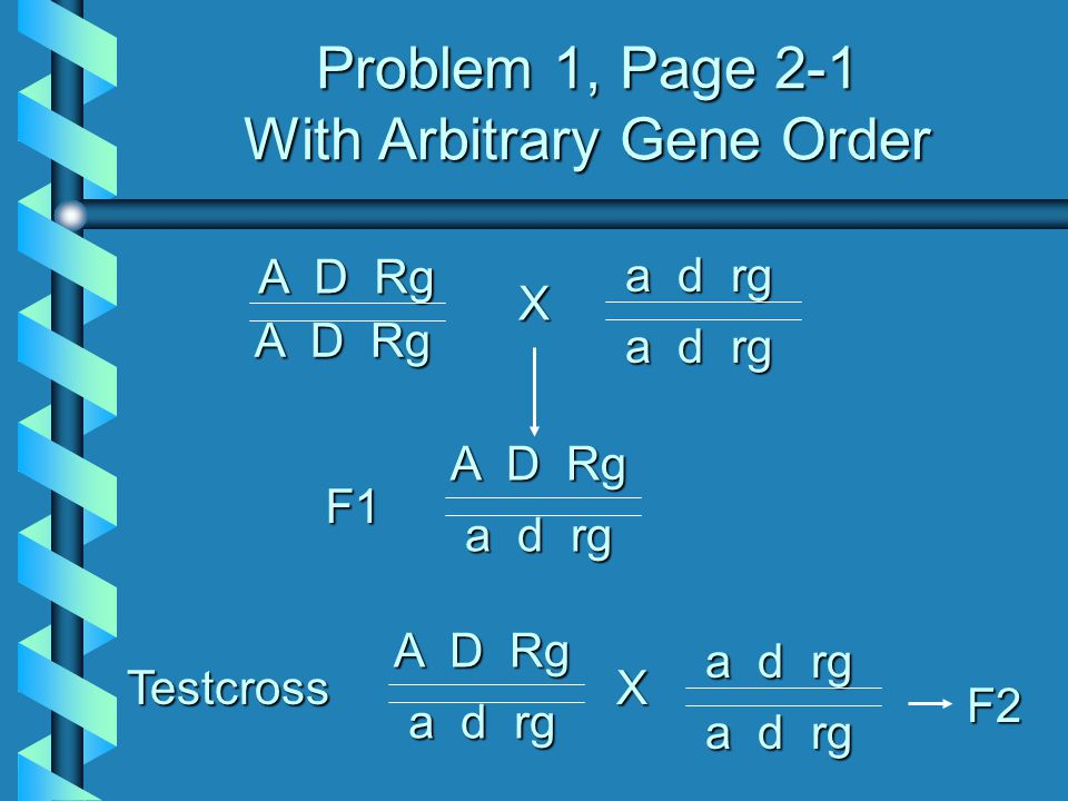 Problem 1, Page 2-1 With Arbitrary Gene Order