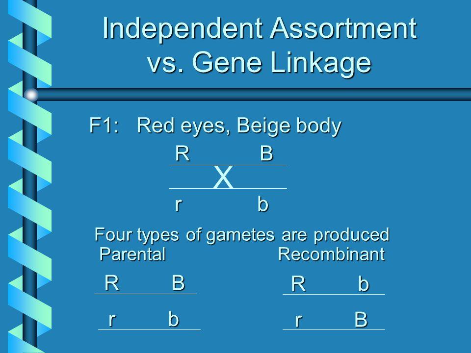 Independent Assortment vs. Gene Linkage
