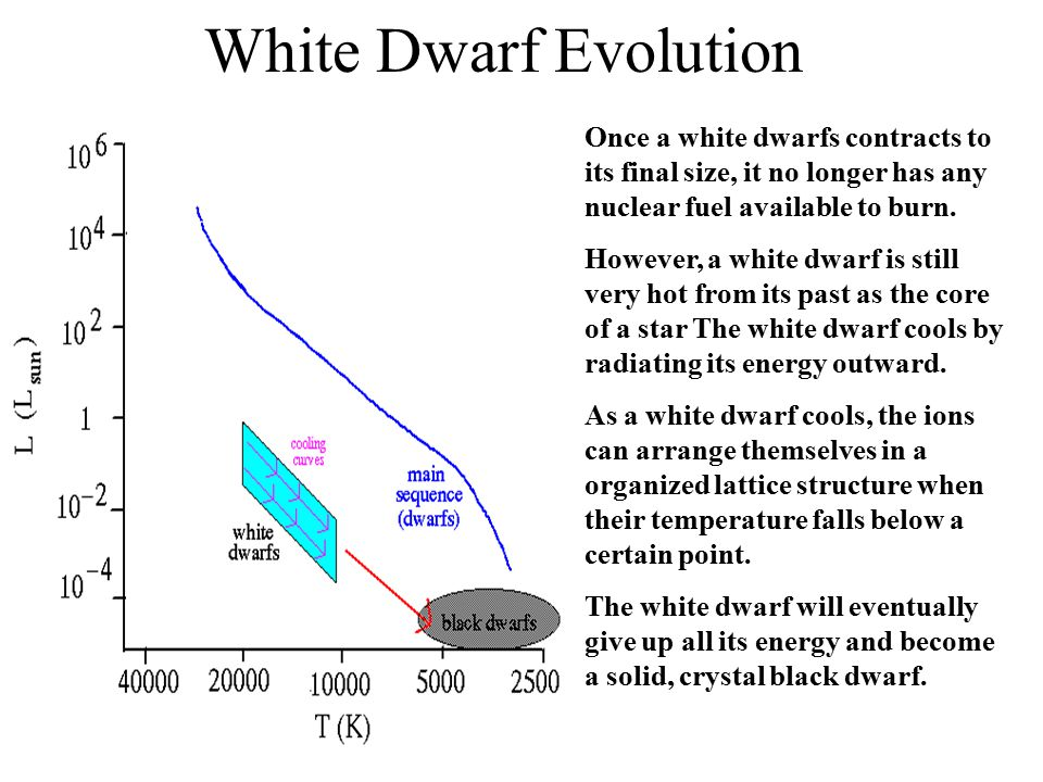 White Dwarf Evolution Once a white dwarfs contracts to its final size, it no longer has any nuclear fuel available to burn.