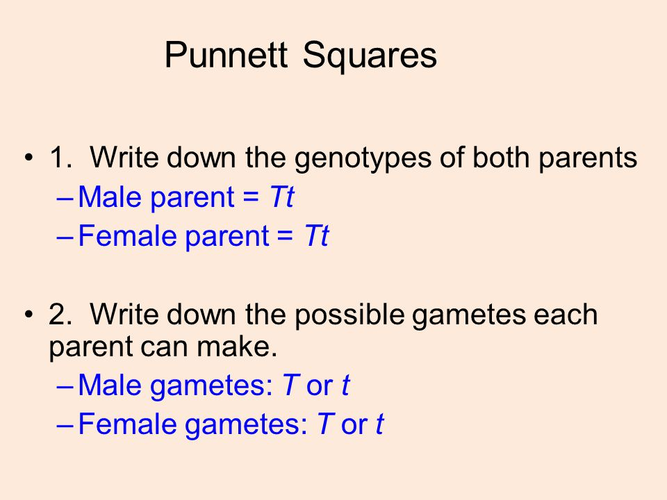 Punnett Squares 1. Write down the genotypes of both parents