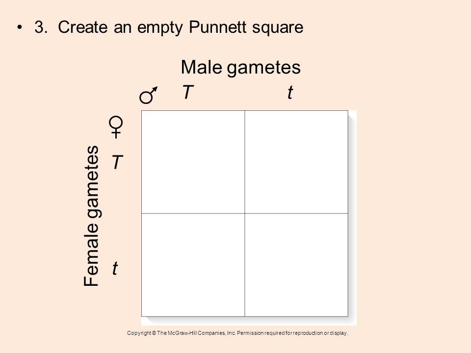 Male gametes T t T Female gametes t 3. Create an empty Punnett square