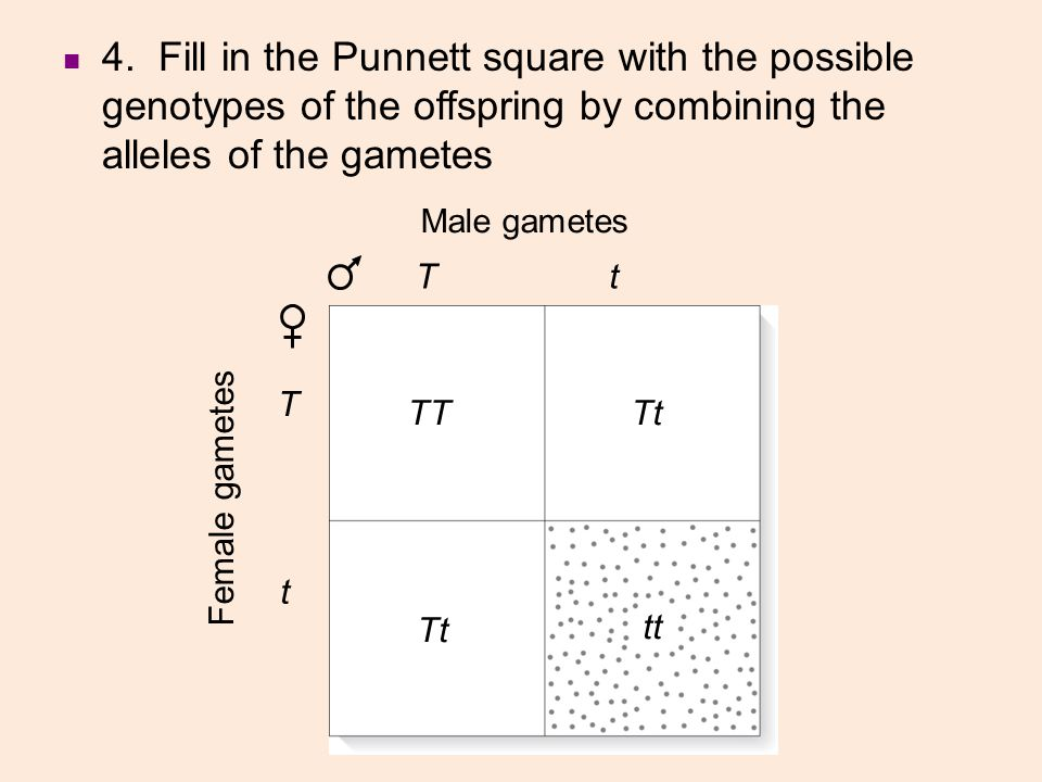 4. Fill in the Punnett square with the possible genotypes of the offspring by combining the alleles of the gametes