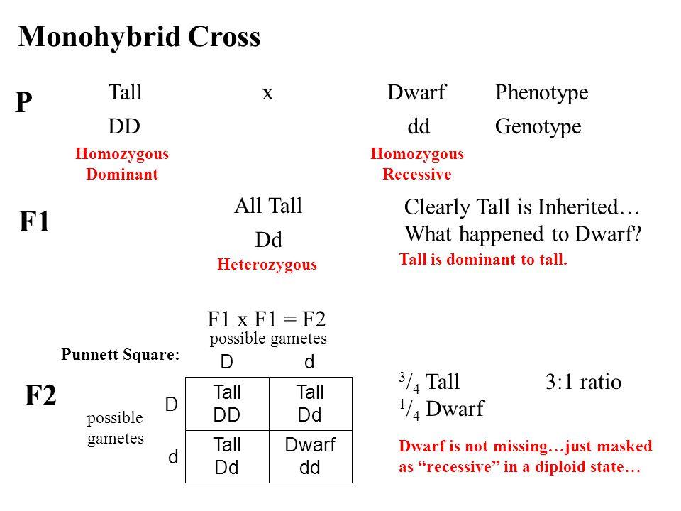 Monohybrid Cross P F1 F2 Tall x Dwarf Phenotype DD dd Genotype
