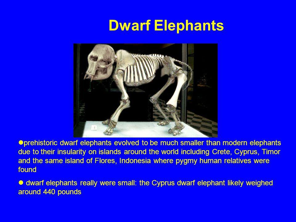 Dwarf Elephants