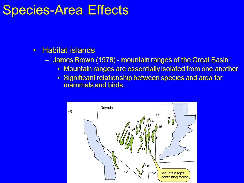 Species-Area Effects Habitat islands