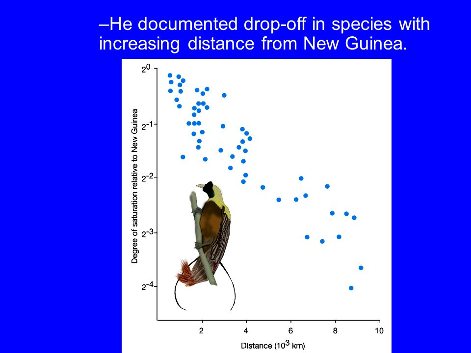 He documented drop-off in species with increasing distance from New Guinea.