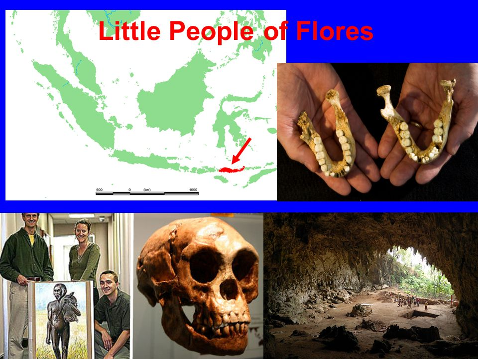 Little People of Flores