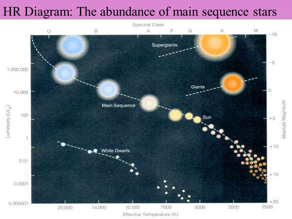 HR Diagram: The abundance of main sequence stars