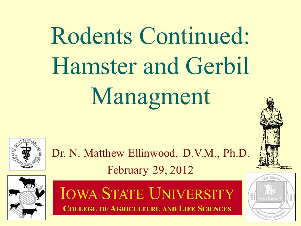 Rodents Continued: Hamster and Gerbil Managment