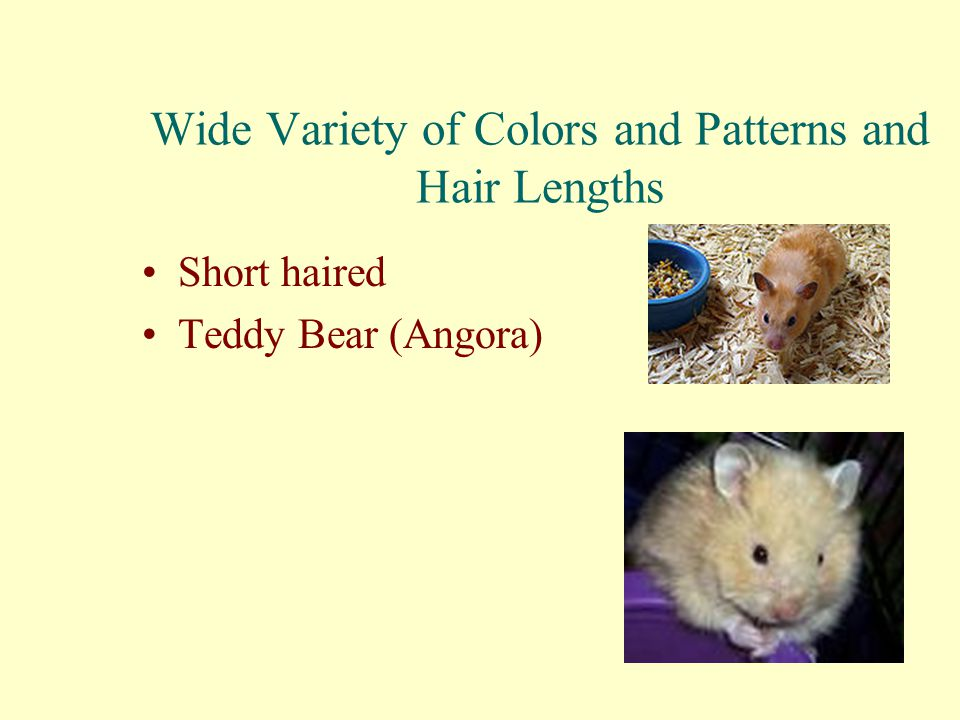 Wide Variety of Colors and Patterns and Hair Lengths