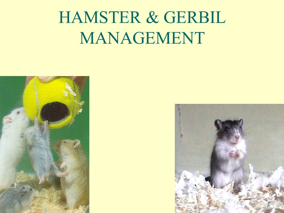 HAMSTER & GERBIL MANAGEMENT