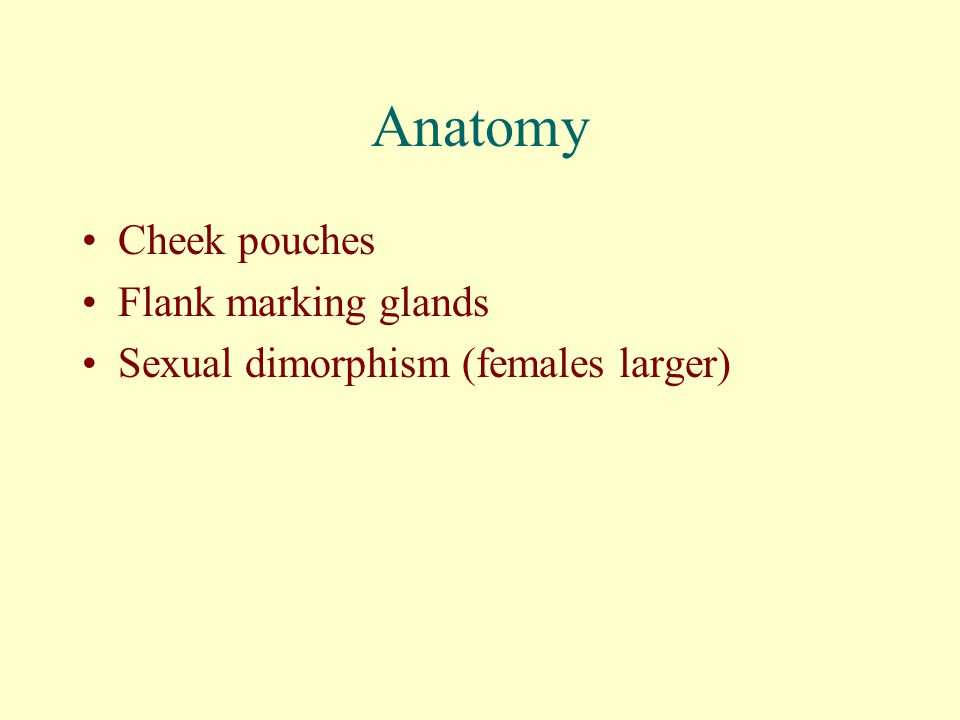 Anatomy Cheek pouches Flank marking glands