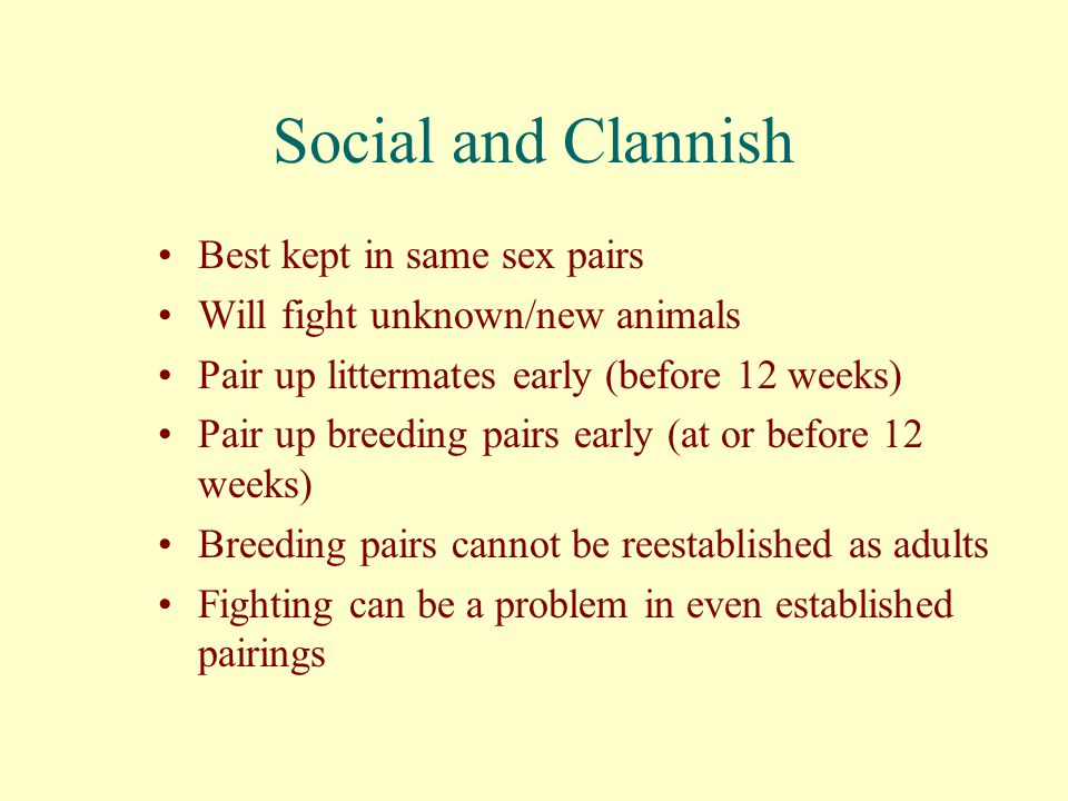 Social and Clannish Best kept in same sex pairs