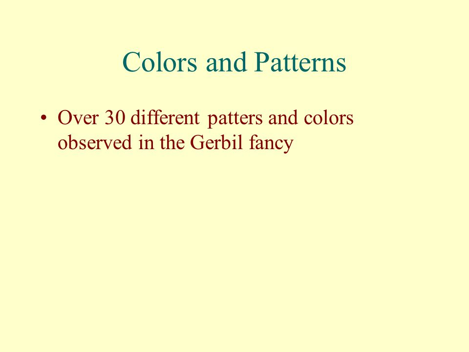 Colors and Patterns Over 30 different patters and colors observed in the Gerbil fancy