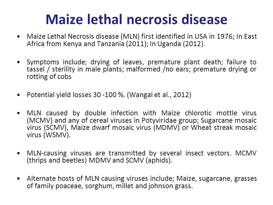 Maize lethal necrosis disease