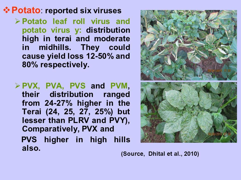 Potato: reported six viruses