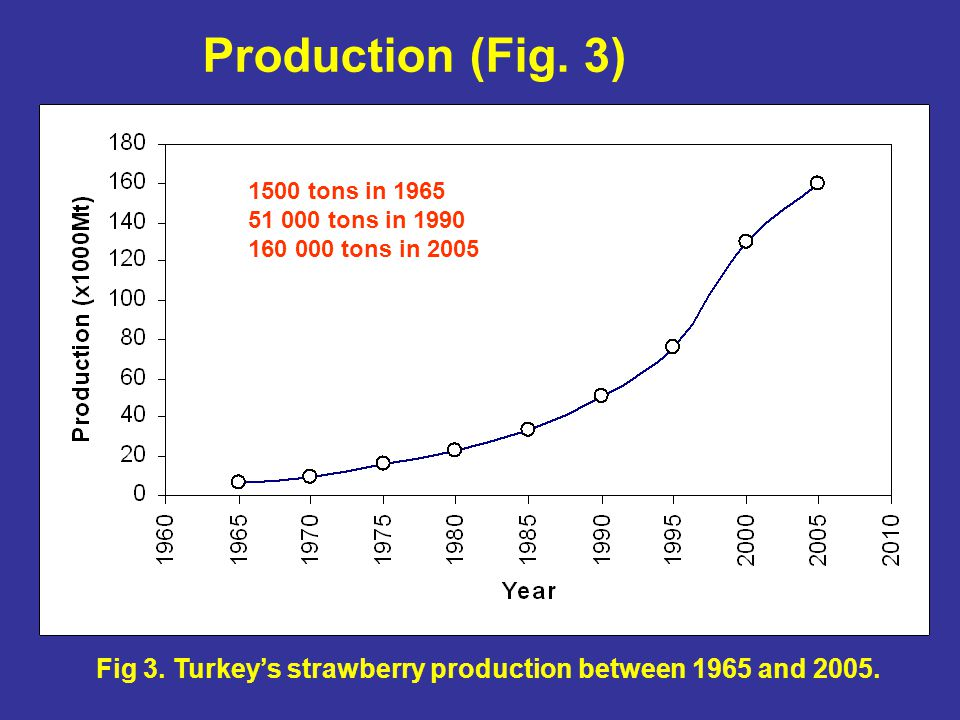 Fig 3. Turkey's strawberry production between 1965 and 2005.