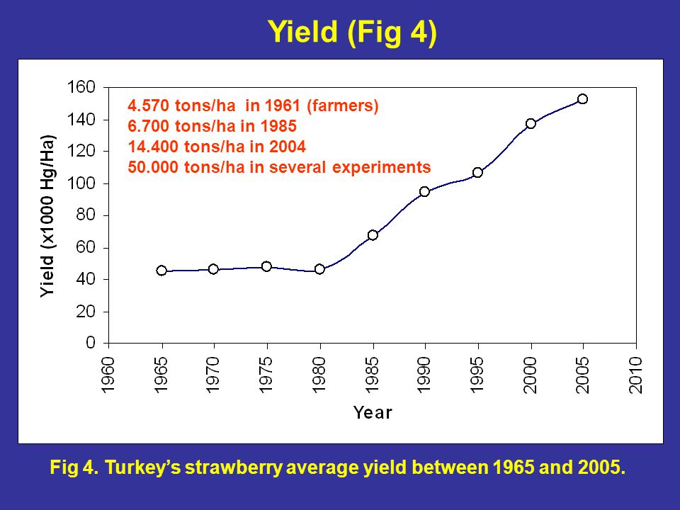 Fig 4. Turkey's strawberry average yield between 1965 and 2005.