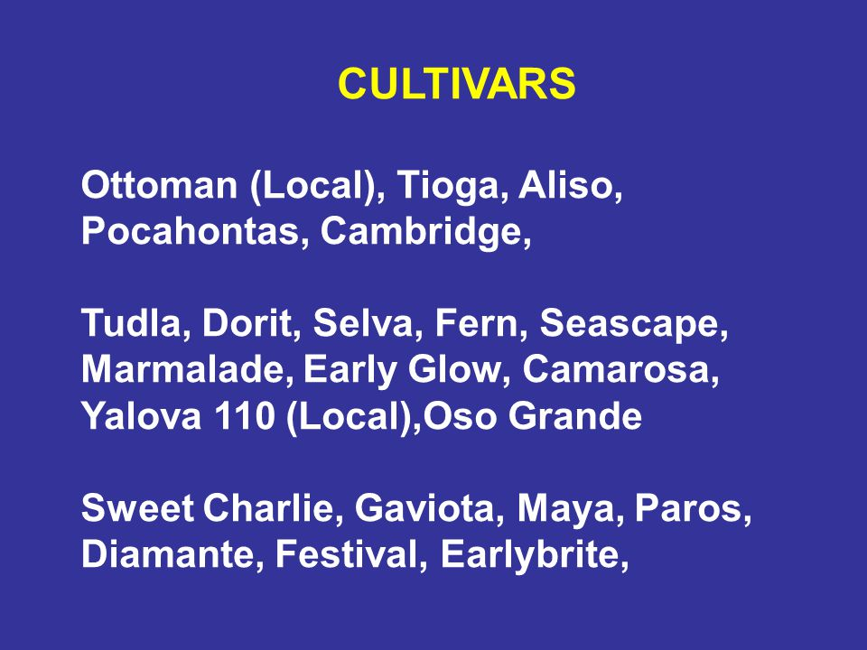 CULTIVARS Ottoman (Local), Tioga, Aliso, Pocahontas, Cambridge,
