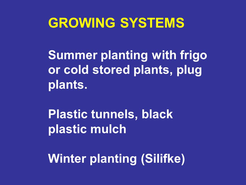 GROWING SYSTEMS Summer planting with frigo or cold stored plants, plug plants. Plastic tunnels, black plastic mulch.