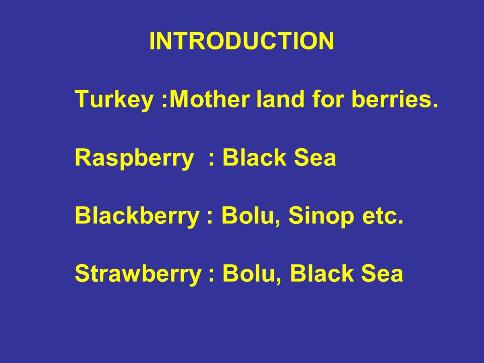 INTRODUCTION Turkey :Mother land for berries. Raspberry : Black Sea. Blackberry : Bolu, Sinop etc.