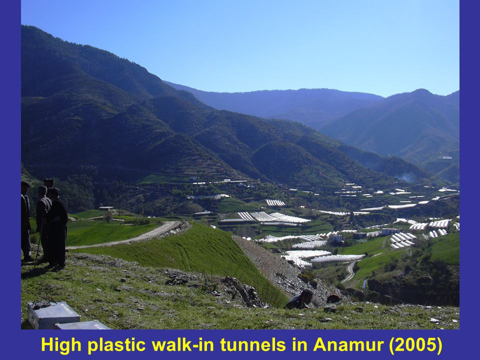 High plastic walk-in tunnels in Anamur (2005)