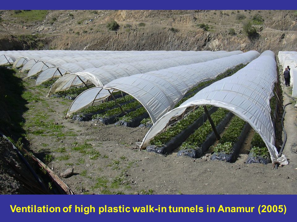 Ventilation of high plastic walk-in tunnels in Anamur (2005)