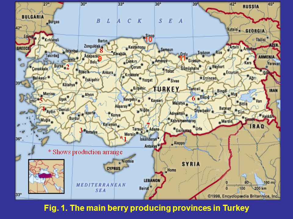 Fig. 1. The main berry producing provinces in Turkey