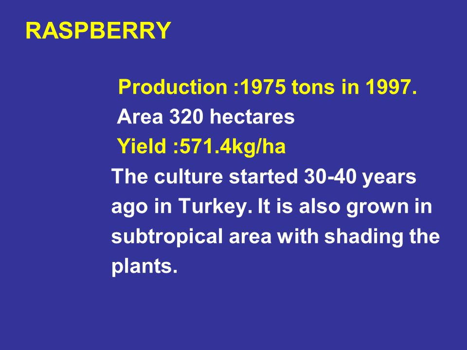 RASPBERRY Production :1975 tons in 1997. Area 320 hectares