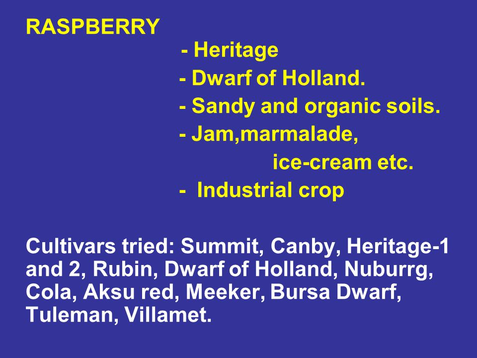 RASPBERRY - Heritage - Dwarf of Holland. - Sandy and organic soils. - Jam,marmalade, ice-cream etc.