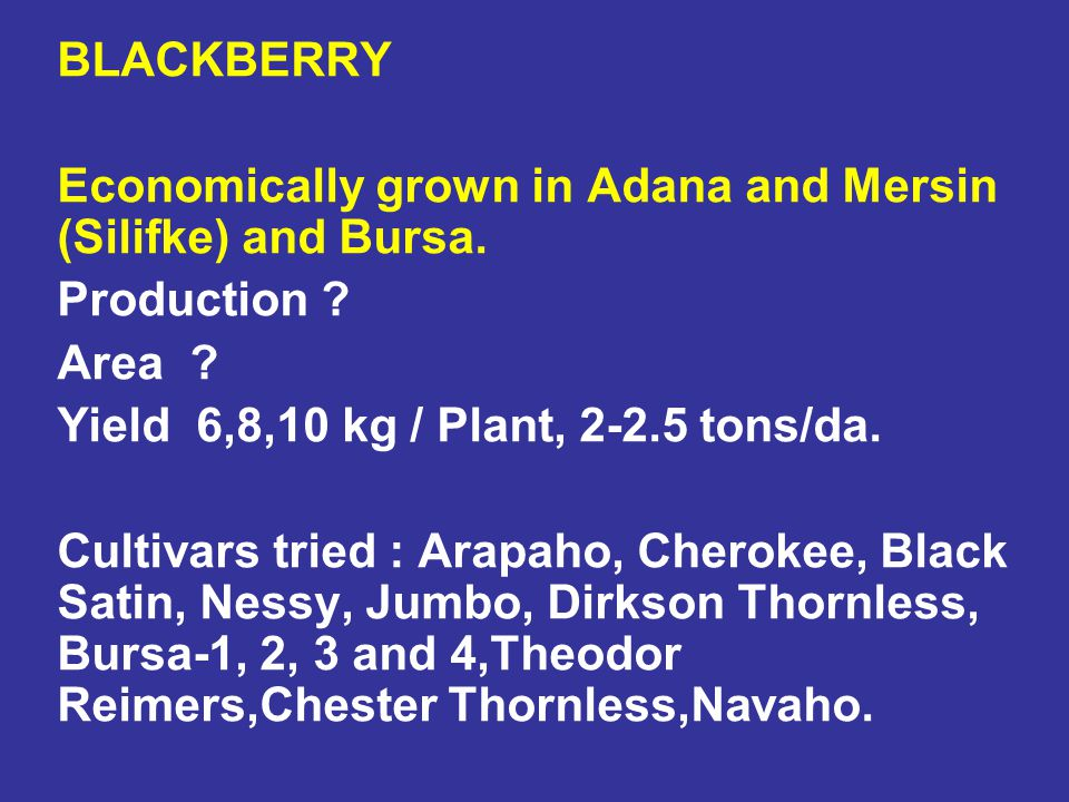 BLACKBERRY Economically grown in Adana and Mersin (Silifke) and Bursa. Production Area Yield 6,8,10 kg / Plant, 2-2.5 tons/da.