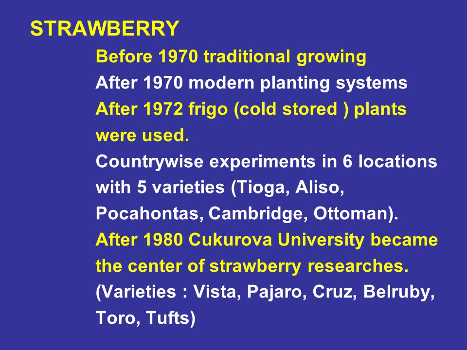 STRAWBERRY Before 1970 traditional growing. After 1970 modern planting systems. After 1972 frigo (cold stored ) plants.