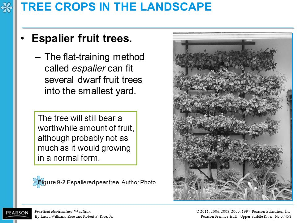 TREE CROPS IN THE LANDSCAPE