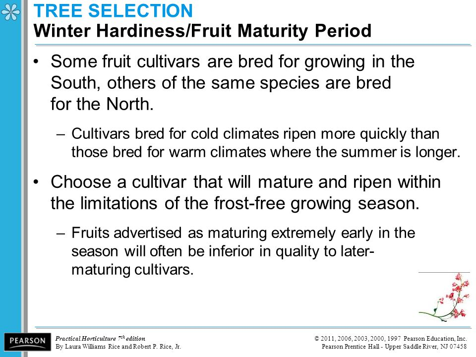 TREE SELECTION Winter Hardiness/Fruit Maturity Period