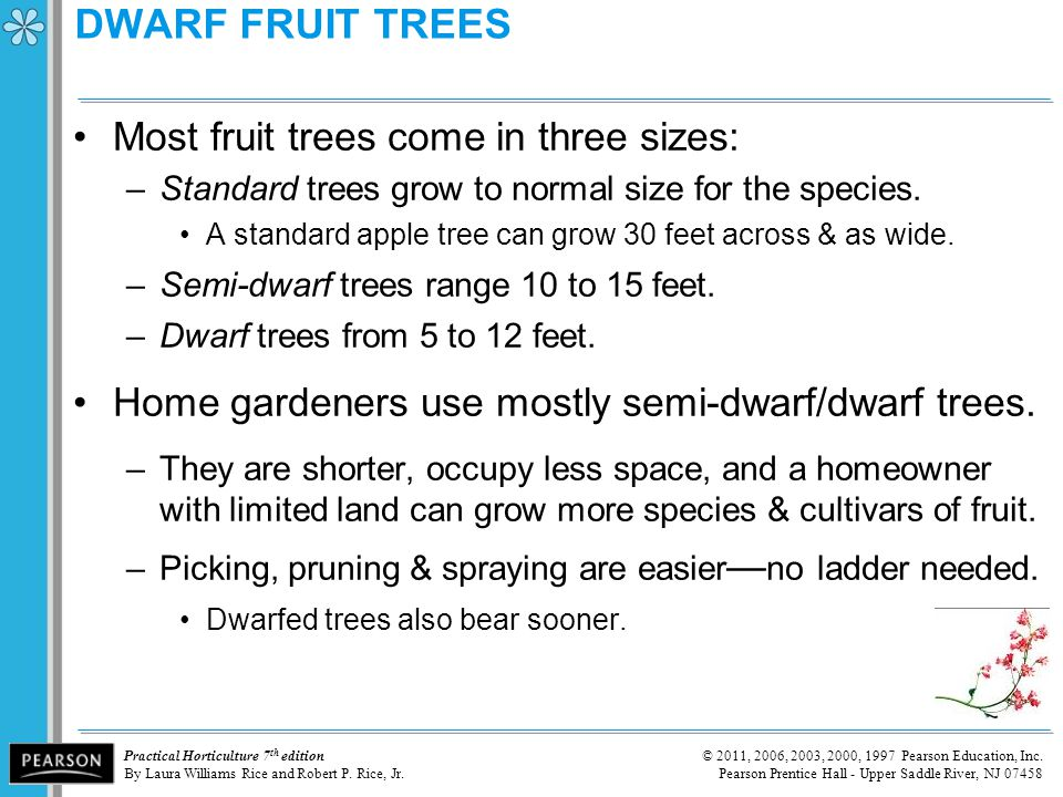 DWARF FRUIT TREES Most fruit trees come in three sizes: