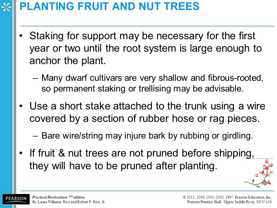 PLANTING FRUIT AND NUT TREES